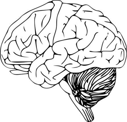 Anatomia mózgu