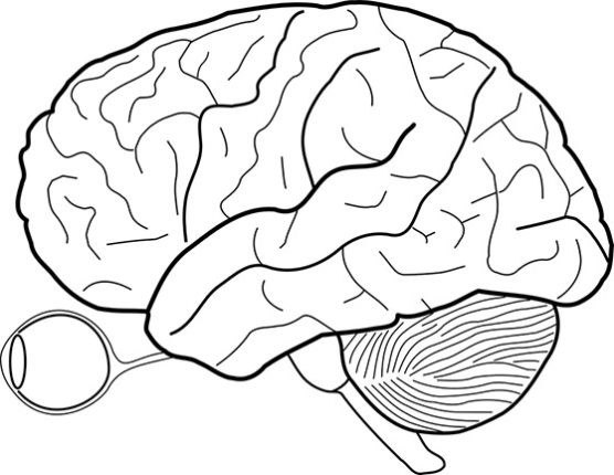 Mózg (3)