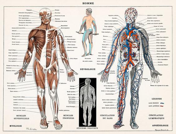System nerwowy (2)